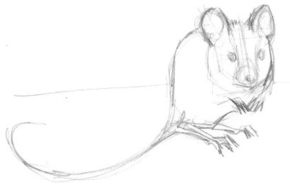 Sitting  mouse pencil sketch
