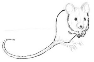 mouse 004