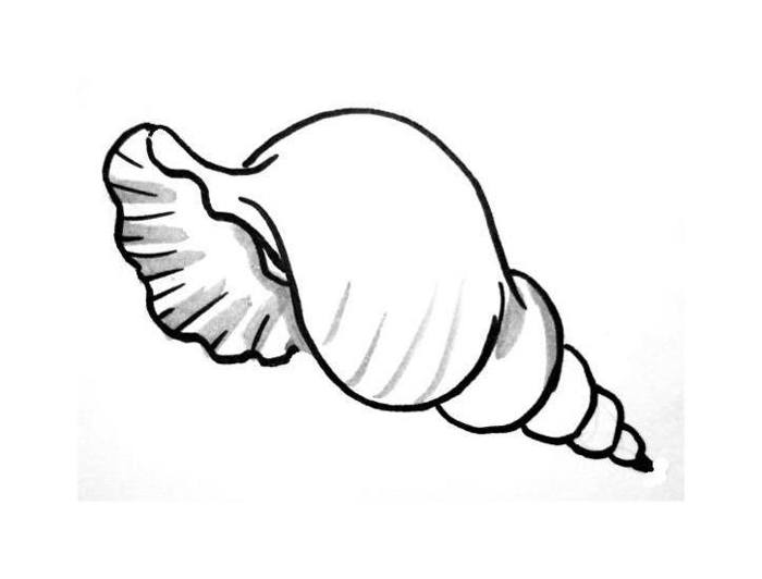 sea shell coloring page 2