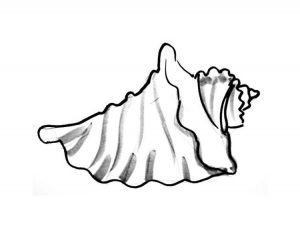 Sea shell coloring picture