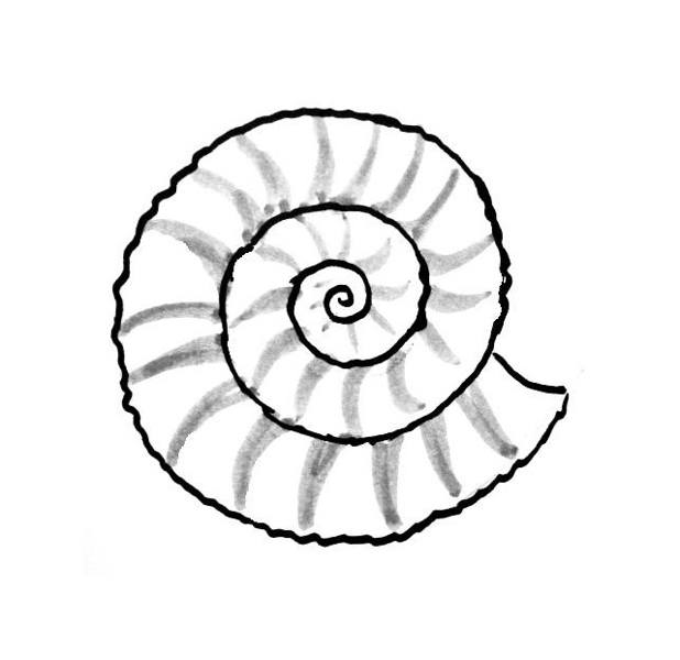 Sea shell coloring pages for Shells coloring page