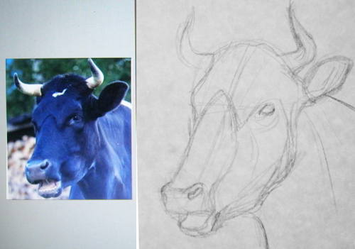 How to draw bull head and face