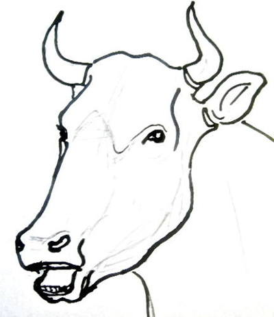 Bull(cow)head and face drawing