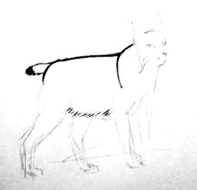 Lynx body drawing
