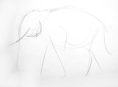 Indian elephant pencil sketch