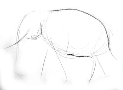 Indian elephant-step by step