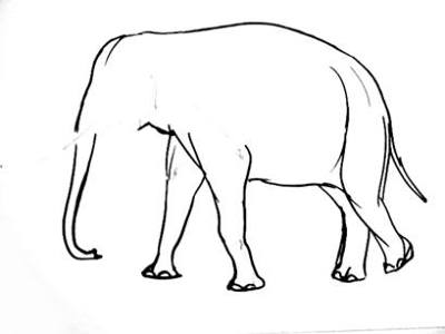 Indian elephant drawing step by step
