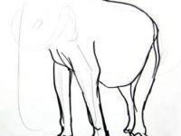Elephant drawing5 004