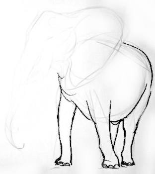 African elephant step by step drawing