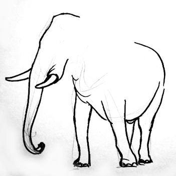 African elephant phased drawing