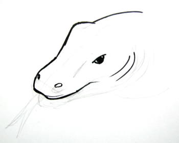 13 Komodo dragon head drawing