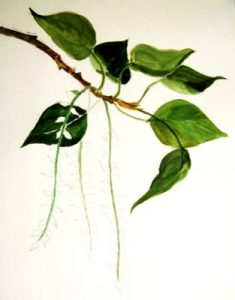 Poplar drawing from nature