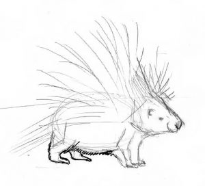 Porcupine drawing step by step