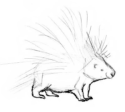Porcupine drawing tutorial