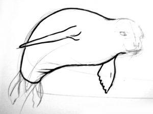 Seal fins drawing