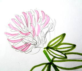 Clower flower drawing