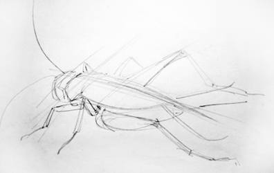 Cricket pencil outline