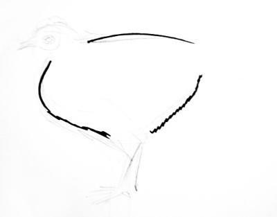 Hen torso drawing