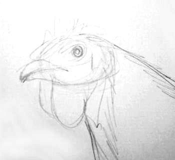 Hen head sketch