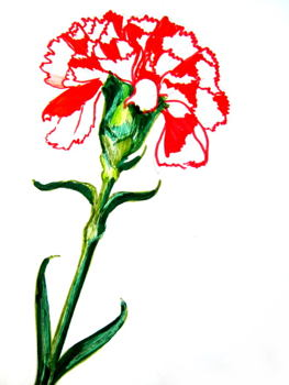 Carnation painting step by step