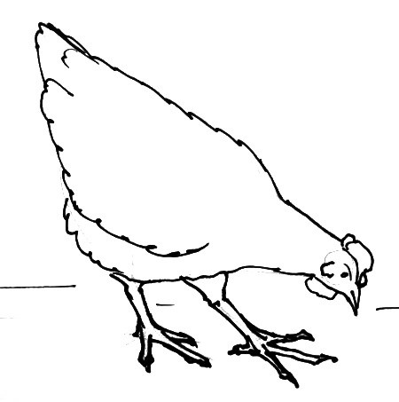 Hen outline