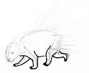 Porcupine legs drawing