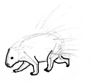 Porcupine phased drawing