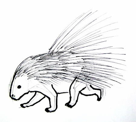 Porcupine drawing 49