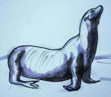 Walking sea lion drawing