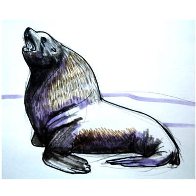 sea lion drawing in colors