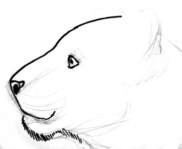 Tiger face in profile drawing