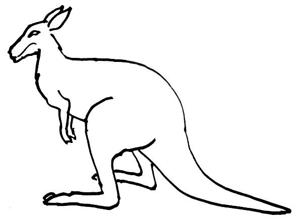 Cute Baby Kangaroo Drawing