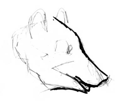Bear profile drawing