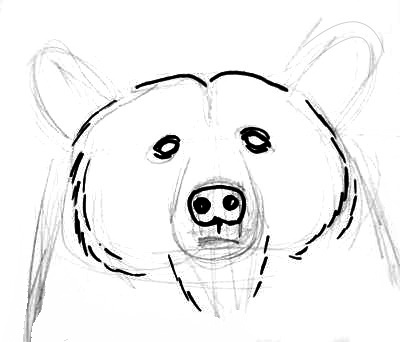 Bear face step by stepHow todraw bear face step by step
