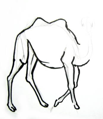 Camel phased drawing