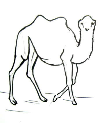 Camel drawing 13