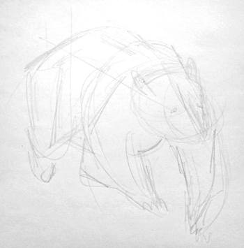 Bear front view sketch
