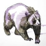 Learn how to draw a brown Bear