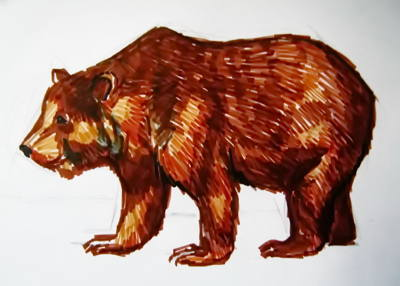 Brown Bear drawing