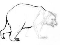 Brown bear hind legs drawing