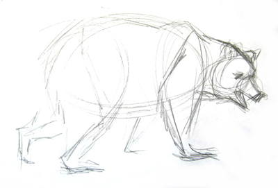 Brown Bear pencil sketch.