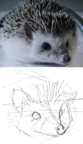 How to draw a hedgehog head