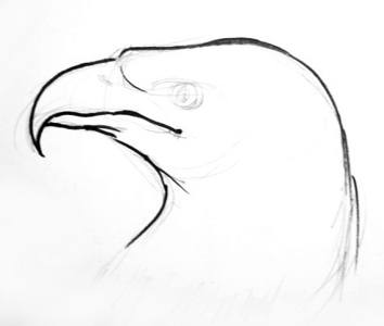 Eagle head drawing for kids.