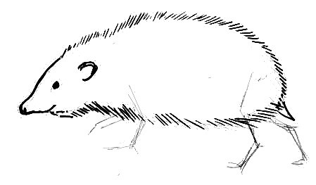 Hedgehog  step-by-step drawing lesson