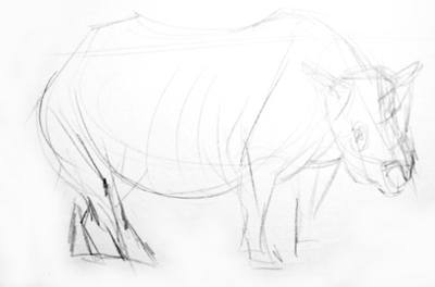 Rhinoceros pencil sketh