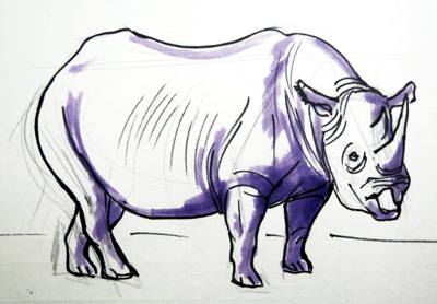African Rhino drawing