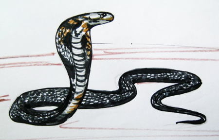 how to draw a cobra snake easy