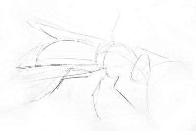 Pencil wasp sketch