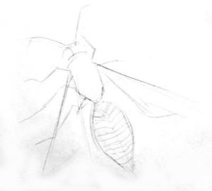 Wasp outline