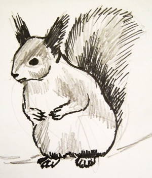 Seated Squirrel drawing